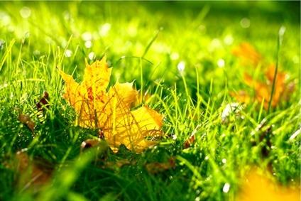 Semer en automne - Couleurs d'automne