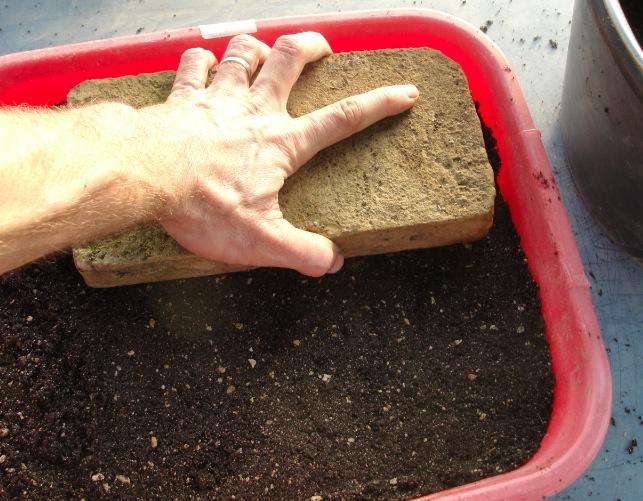 Bac à semis Préparation des bacs 4
