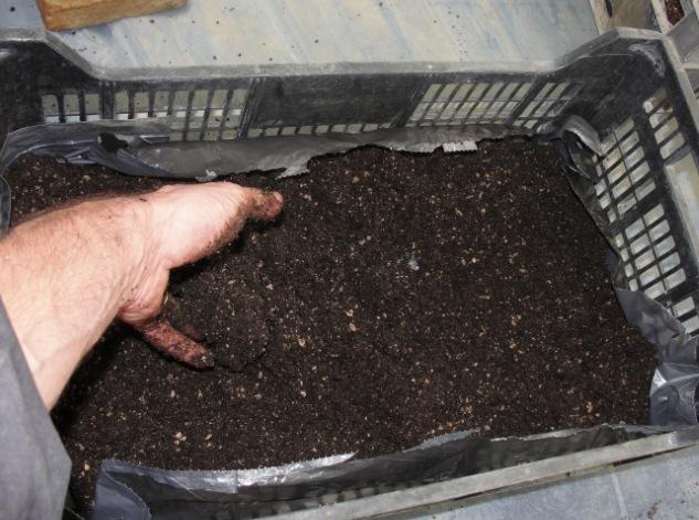 Bac à semis - Préparation des bacs 3